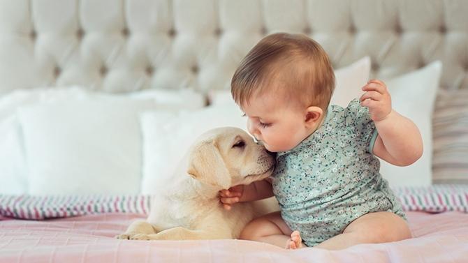 Adopter un animal : quels sont les risques pour bébé ?